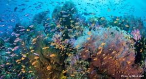 Abundancia no oceano
